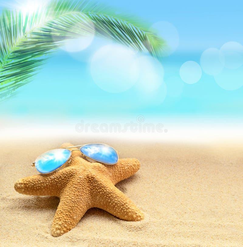 在太阳镜的海星在沙滩和棕榈 库存照片