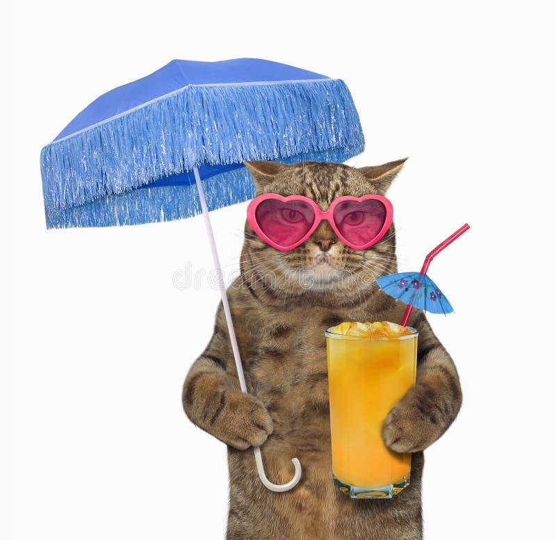 在太阳镜的猫用果汁 库存照片