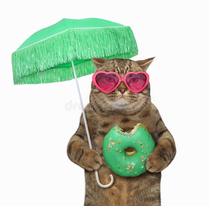 在太阳镜的猫用绿色多福饼 库存照片
