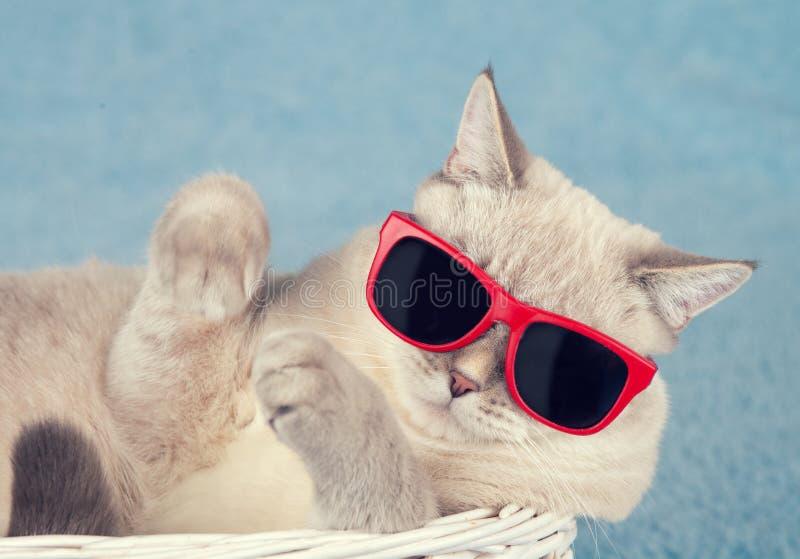 在太阳镜的猫 免版税库存照片