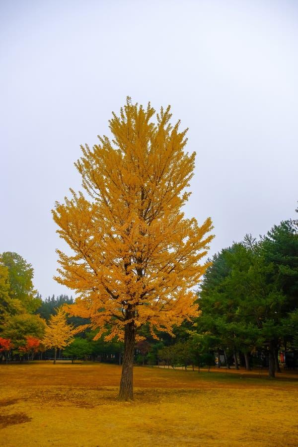 在奈子海岛的五颜六色的秋天,韩国 库存图片