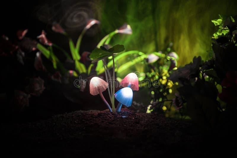 在奥秘黑暗的森林特写镜头的三个幻想发光的蘑菇 不可思议的蘑菇美丽的宏观射击或三灵魂在ava丢失了 库存照片
