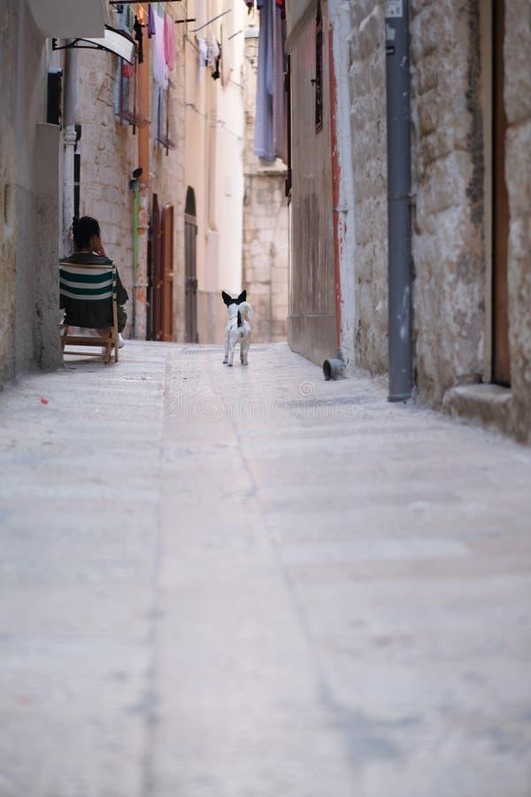在女主人附近的一条小狗 免版税图库摄影