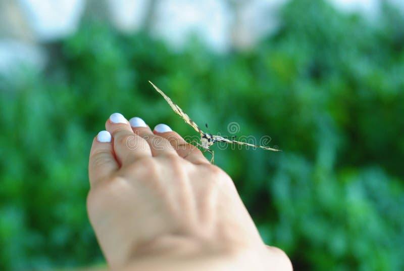在女孩的手上的美丽的蝴蝶 免版税库存照片
