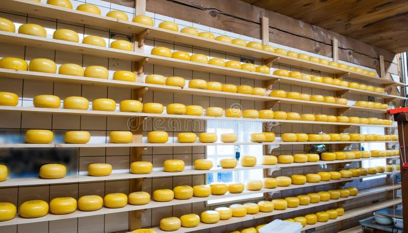 在奶酪制造的荷兰干酪 免版税图库摄影