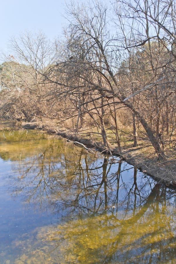 在如毛刷小河地方足迹的树反射 免版税库存照片