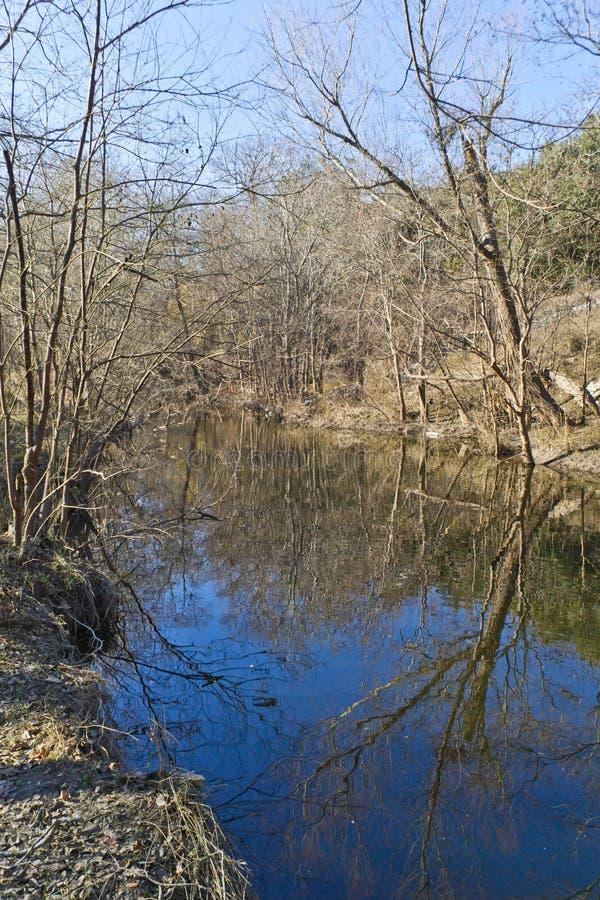 在如毛刷小河地方足迹的树反射 库存照片