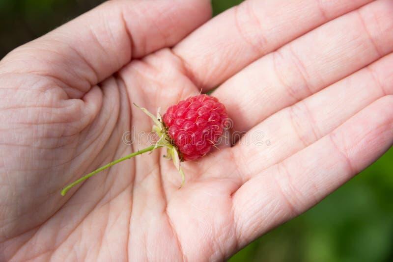 在妇女手上的新鲜的莓 图库摄影