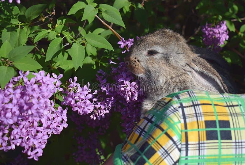 在妇女的胳膊的一只小的兔子 免版税库存照片