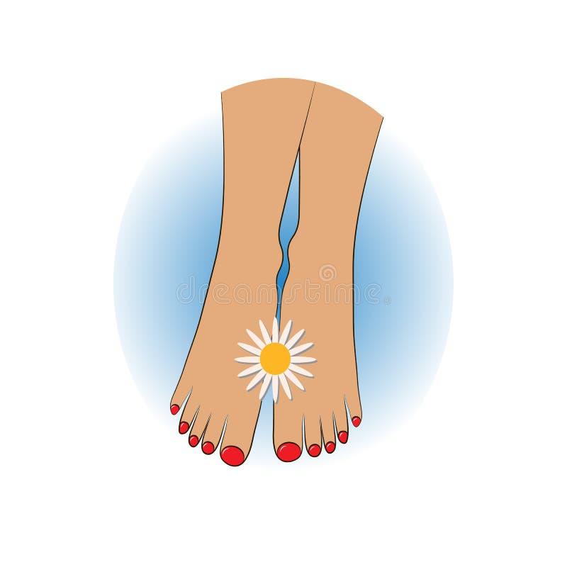 在妇女的脚之间的春黄菊花关闭  皇族释放例证