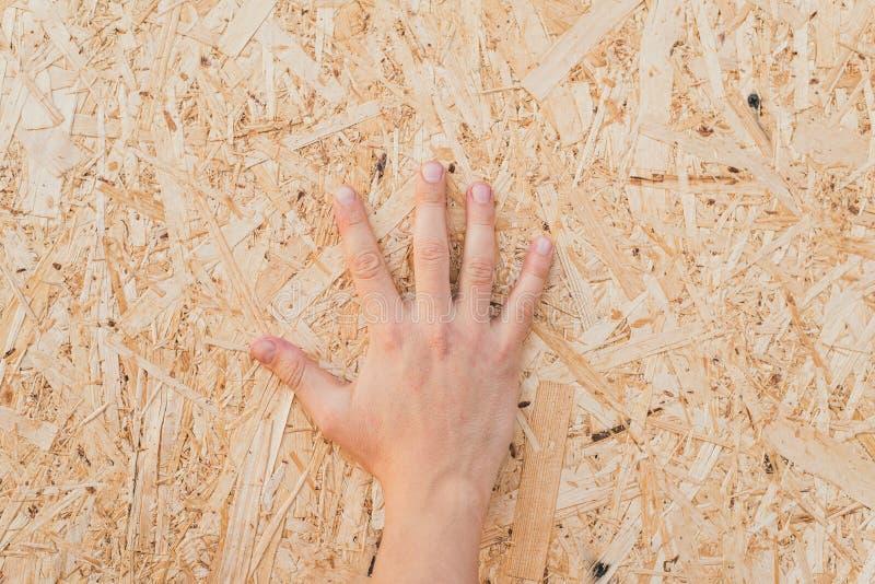 在委员会的被按的锯木屑 在被按的米黄木锯木屑压缩的锯木屑背景板的手  库存照片
