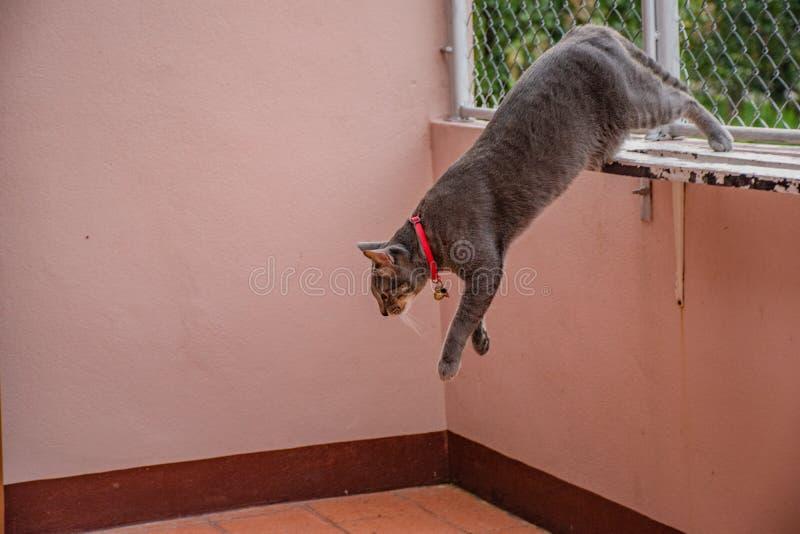 在姿态的猫 图库摄影