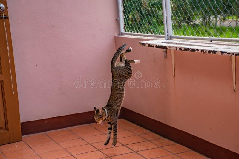 在姿态的猫 免版税图库摄影