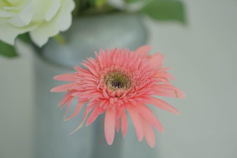 在婚礼白色的桃红色花 免版税库存照片