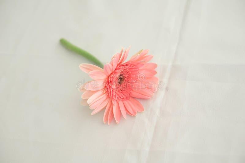 在婚礼的桃红色花投入了一种白色织品 库存图片