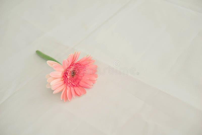 在婚礼的桃红色花投入了一种白色织品 免版税库存照片