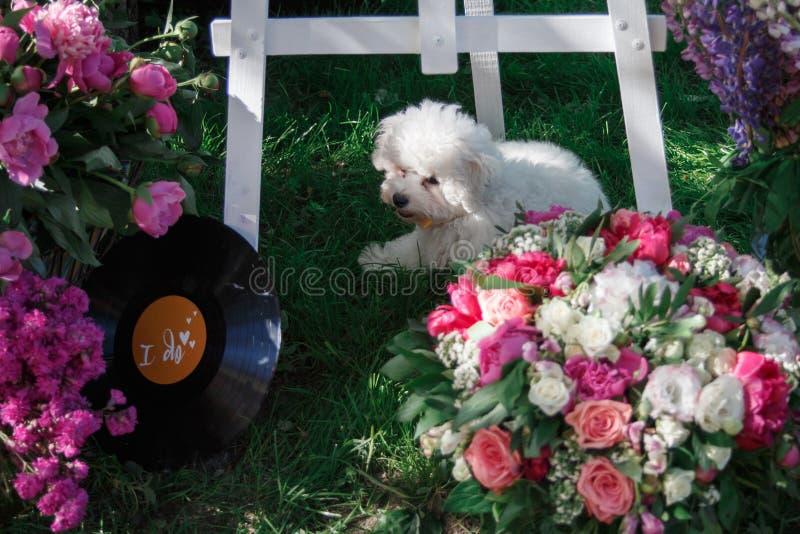 在婚礼聚会的白色小蓬松小狗在五颜六色的花中 免版税图库摄影