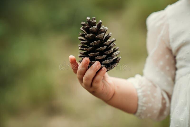 在婴孩手上的杉木锥体 概念查出的本质白色 库存图片