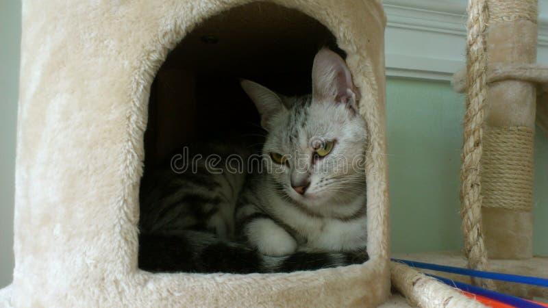 在孔下的猫 免版税库存图片