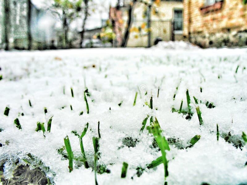 在季节的第一雪的下草 库存图片