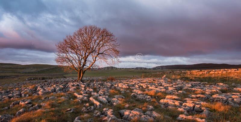在孤立树,约克夏山谷的日落 库存照片