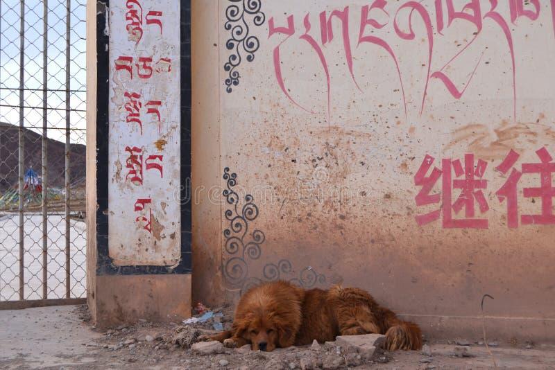 在学校前面的流浪狗 免版税库存图片