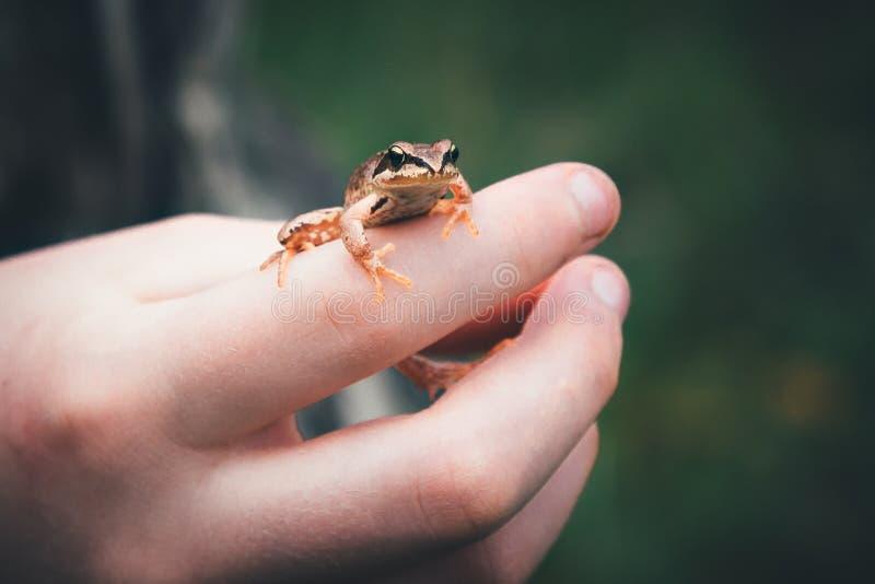 在孩子的手上的一只青蛙 图库摄影