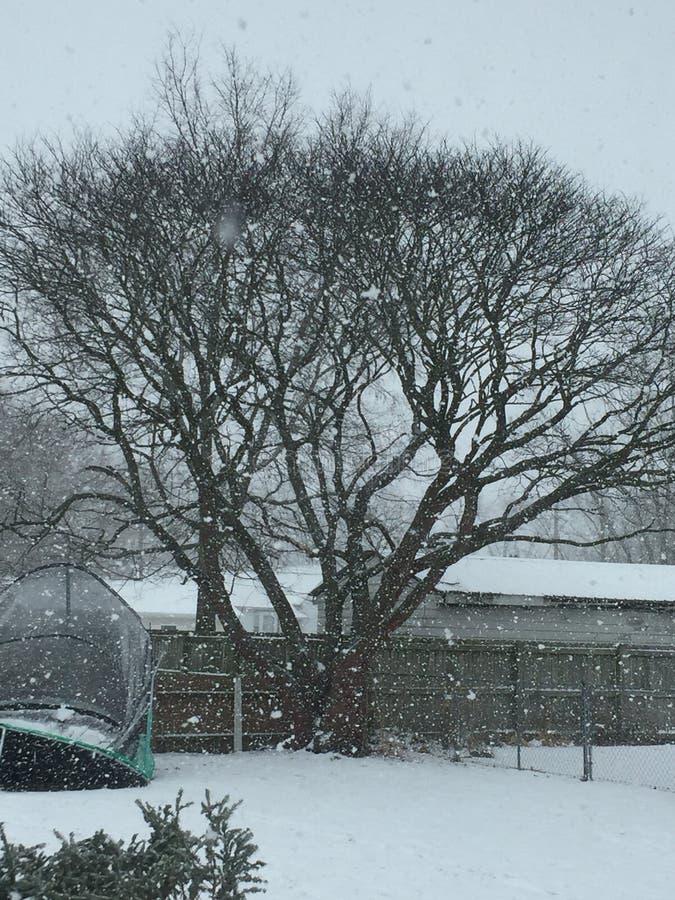 在它最美好的冬天 库存图片