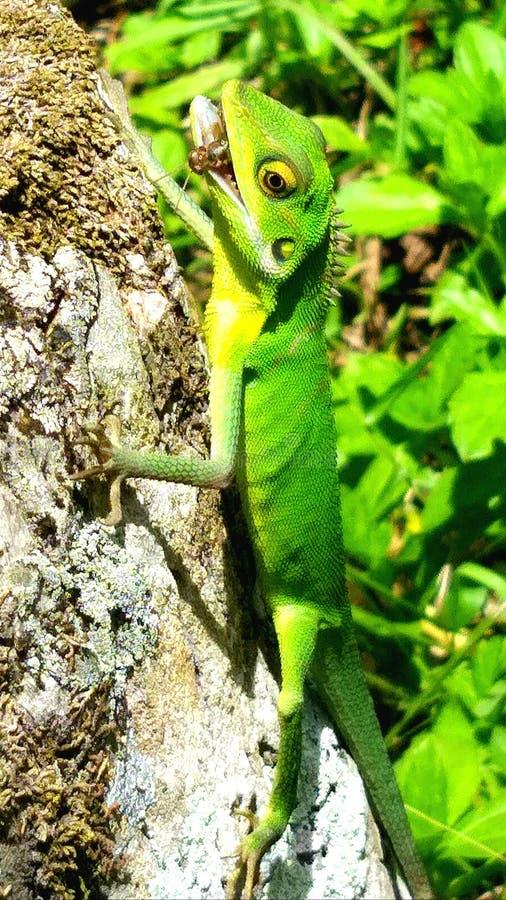 在它最美好的模仿-绿色爬行动物 图库摄影