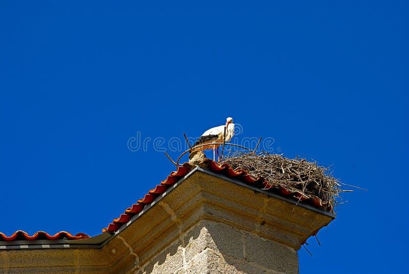 在它的巢的著名鹳在大厦顶部 免版税库存图片