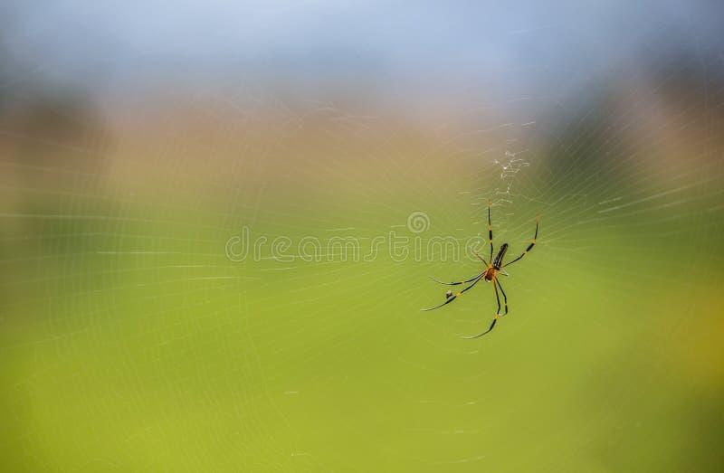在它的网的蜘蛛 免版税库存照片