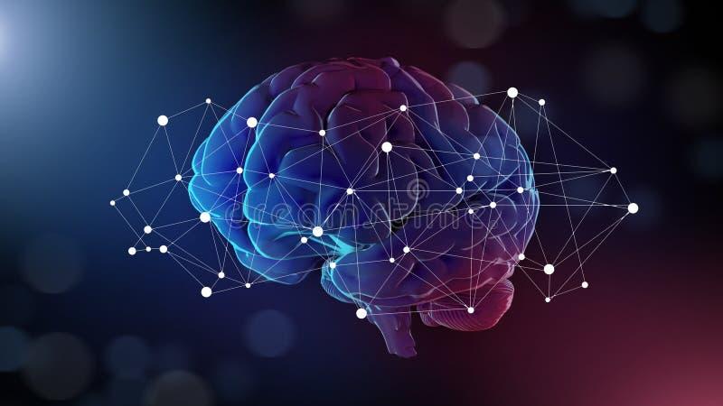 在它附近的人脑和连接网络 库存例证