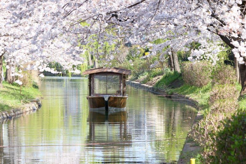 在宇治市运河附近的樱花在Fushimi病区,京都里 库存照片