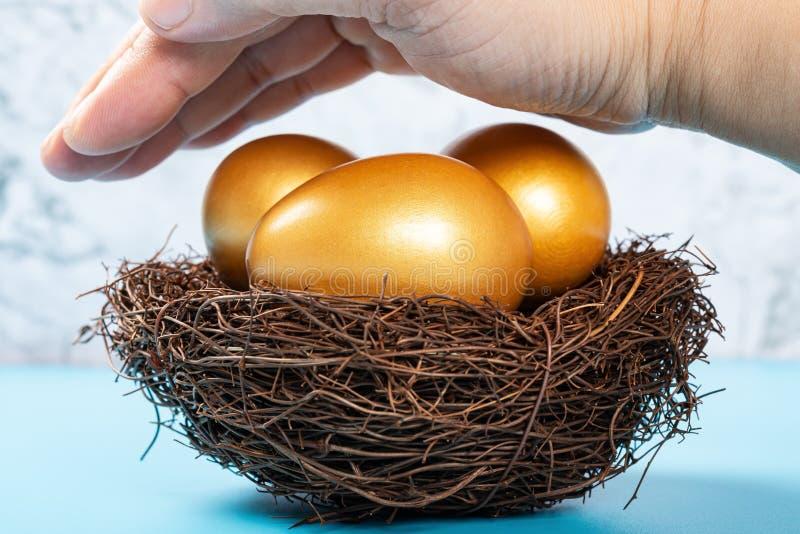 在安全投资的手概念包括的巢的金鸡蛋 库存照片