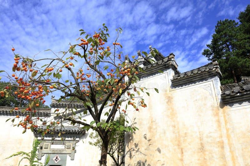 在安徽样式中国传统建筑,多孔黏土rgb前面的柿树 库存图片
