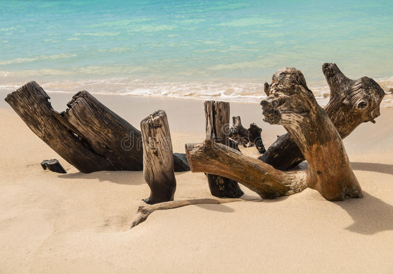 在安提瓜岛海滩的漂流木头 免版税库存图片