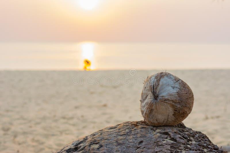 在安达曼海滩的椰子与日落 免版税库存图片