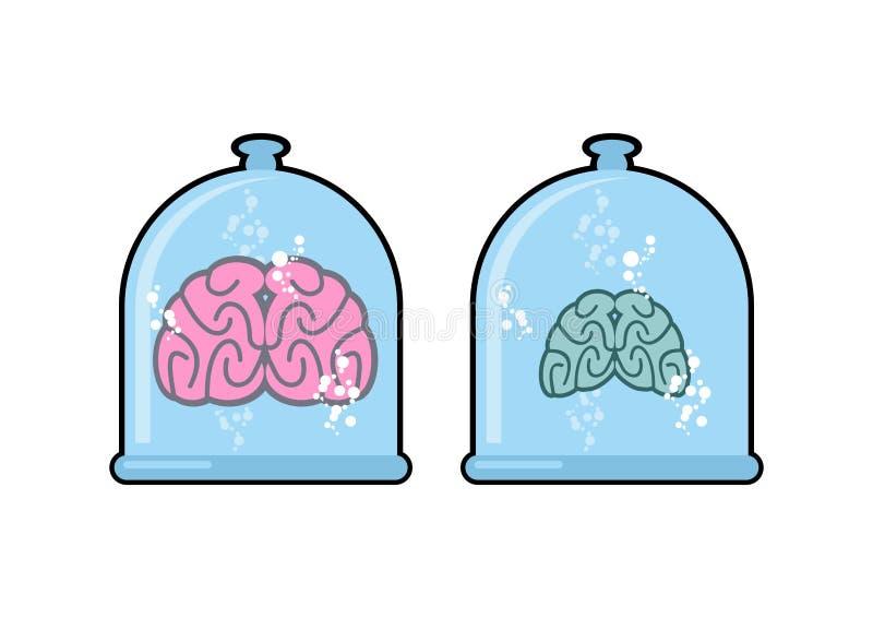 在实验室烧瓶的人脑实验的 在一个闭合的玻璃圆顶的人体 两脑子:一位正常人和傻瓜 向量 库存例证