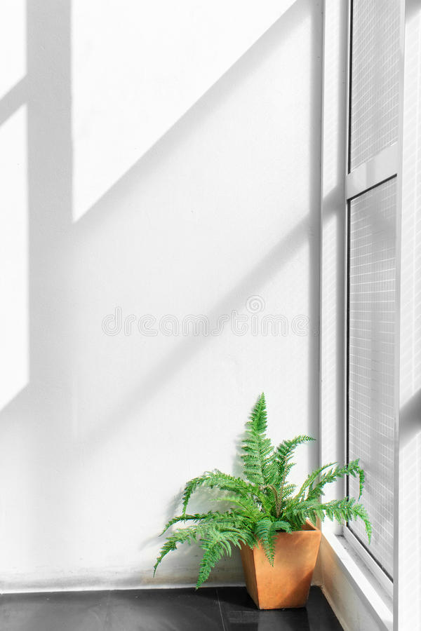 在室内白色墙壁上的轻的树荫 图库摄影