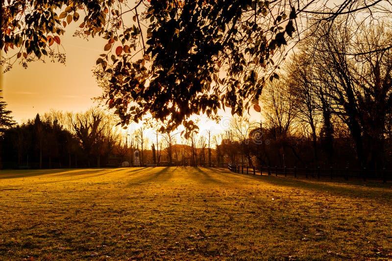 在室外领域的日落视图与在秋天季节期间的叶子 库存图片