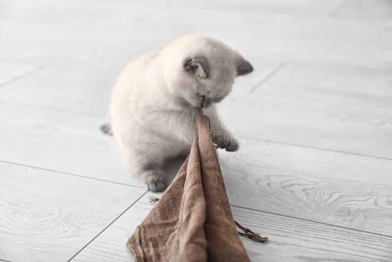 在家使用与格子花呢披肩的逗人喜爱的小的小猫 库存图片