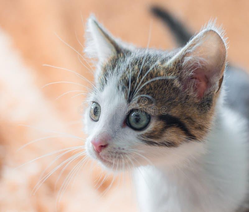 在家基于沙发的小猫,桃红色软的背景 免版税库存图片