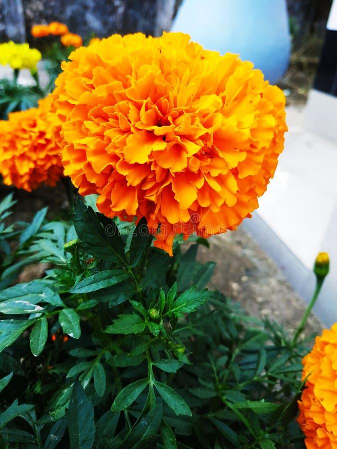 在家庭菜园的花 免版税库存图片
