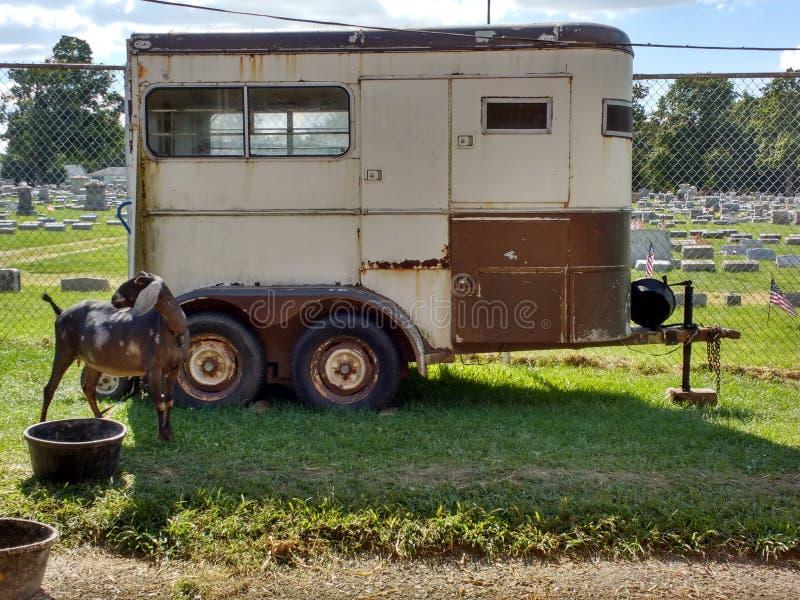 在家畜拖车附近的山羊在集市,宾夕法尼亚,美国 库存照片