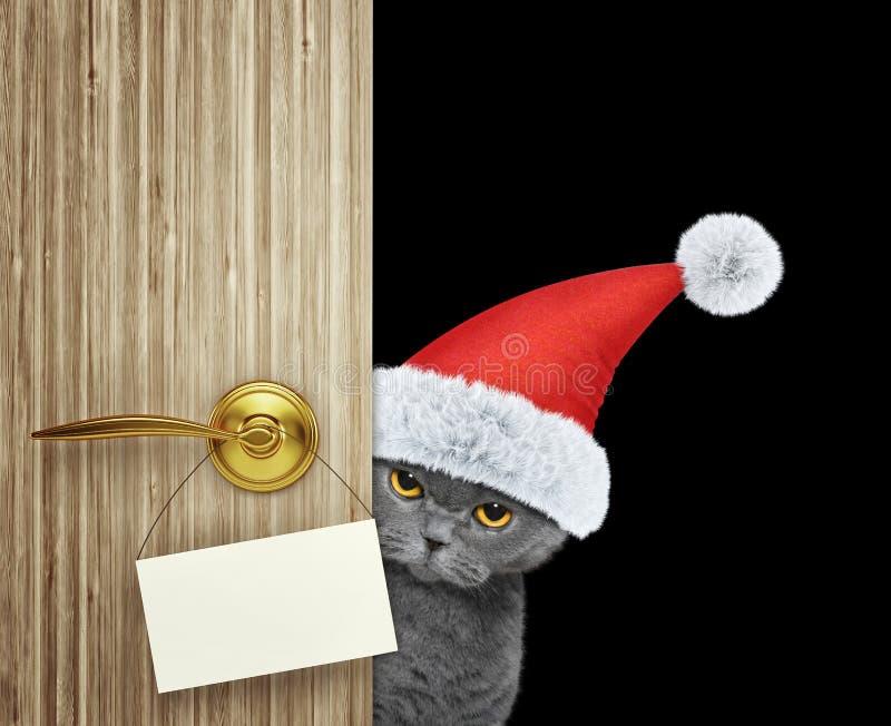 在家看门入口与空的卡片的红色圣诞节圣诞老人帽子的猫 查出在黑色 图库摄影
