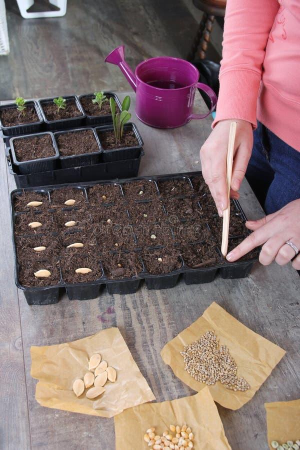 在家种植菜种子的妇女 免版税库存照片