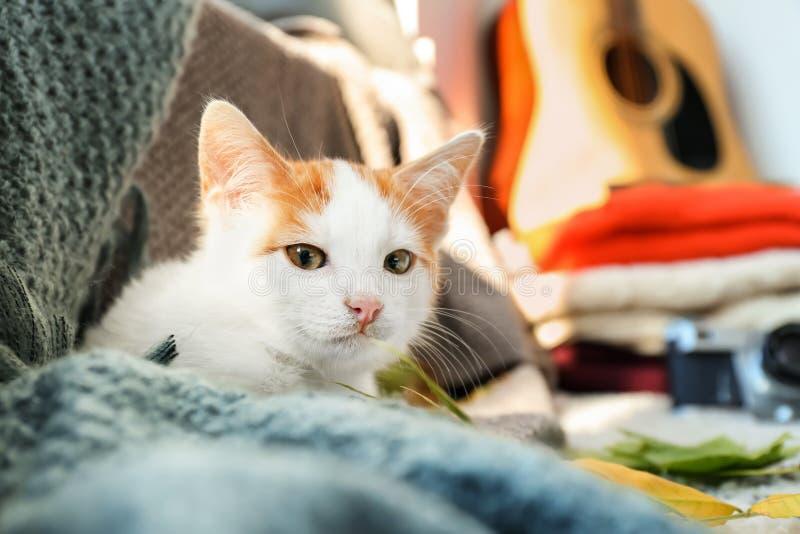 在家说谎在格子花呢披肩的逗人喜爱的小的小猫 免版税库存图片