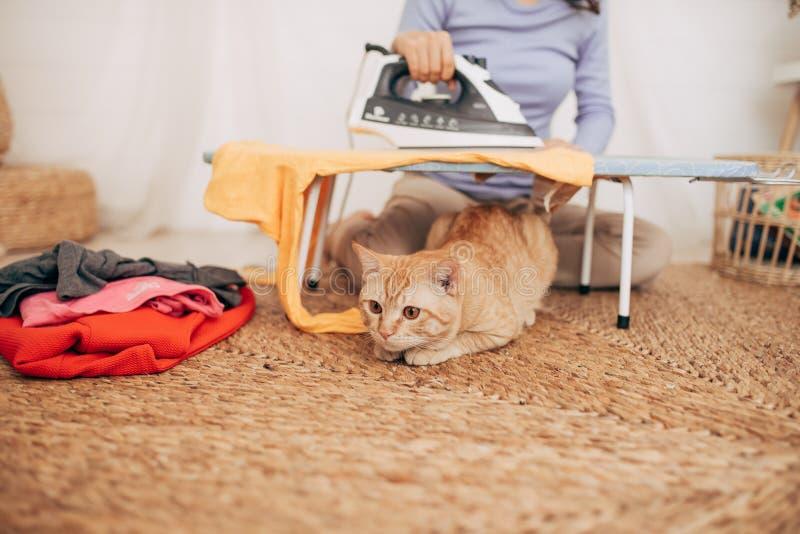 在家说谎在电烙板下的猫 库存照片