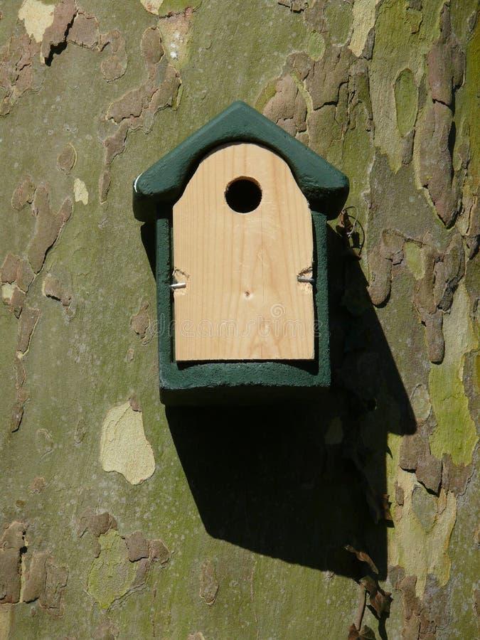 在家鸟 图库摄影