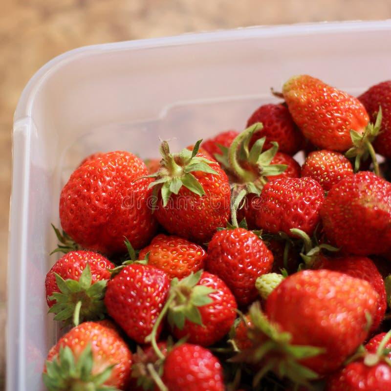 在容器的红色草莓 夏天莓果 免版税库存照片